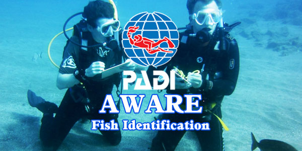 aware-fish-identification
